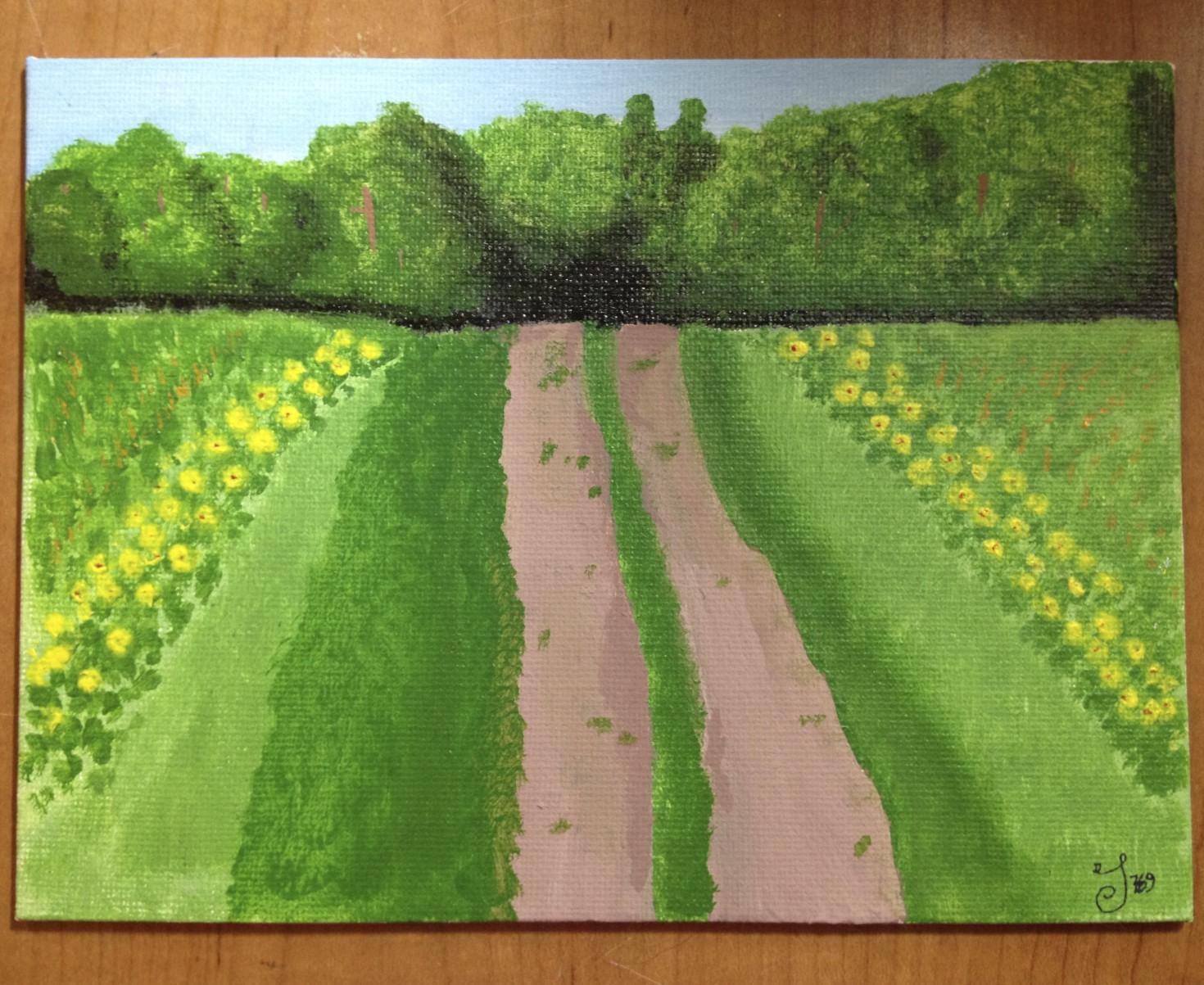 Mr. Sims Sunflower field